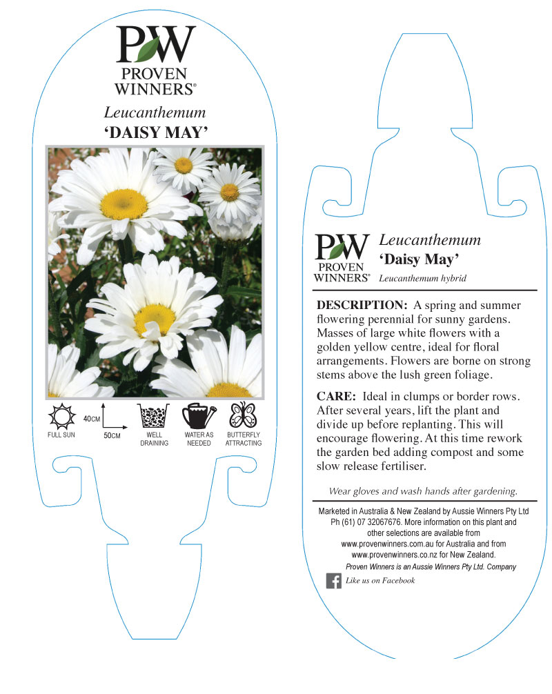 Proven winners new zealand a large flowering shasta daisy the colour is a vibrant white with a distinct yellow centre flowers are held on strong stems well above the foliage izmirmasajfo